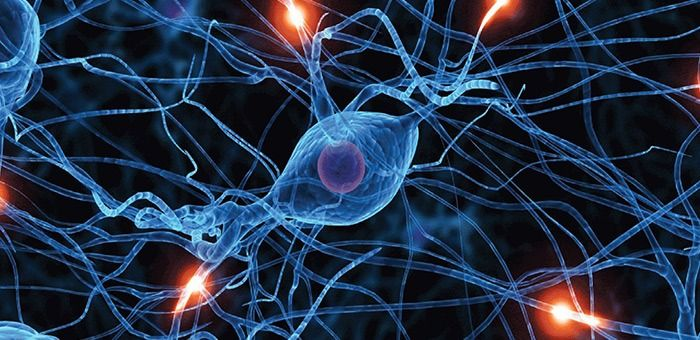 Το νευρικό κύτταρο και οι ιδιότητες του