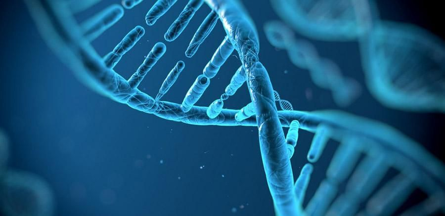 DNA clone