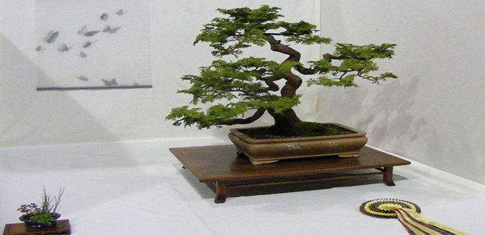 Μπονσάι : η τέχνη των δέντρων νάνων
