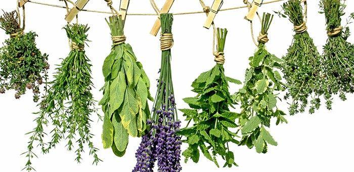 Τα βότανα και πως χρησιμοποιούνται