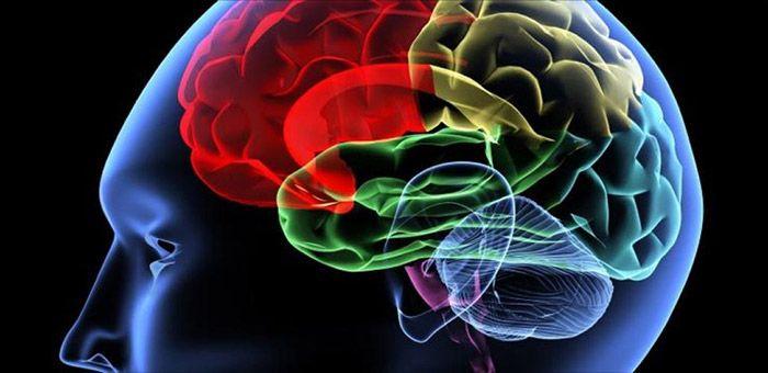 Τα μυστικά του εγκεφάλου
