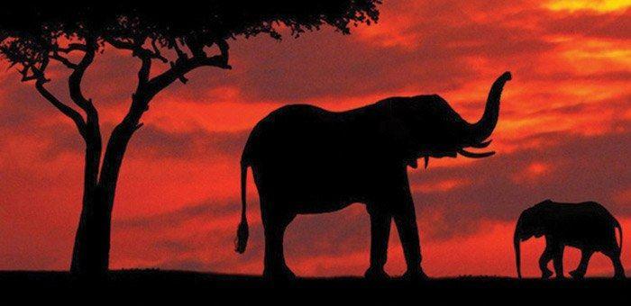 Παραβολές - Ο Ψύλλος και ο Ελέφαντας